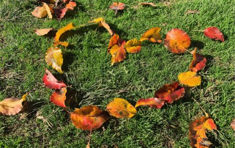 Fall leaves forming the shape of a heart.