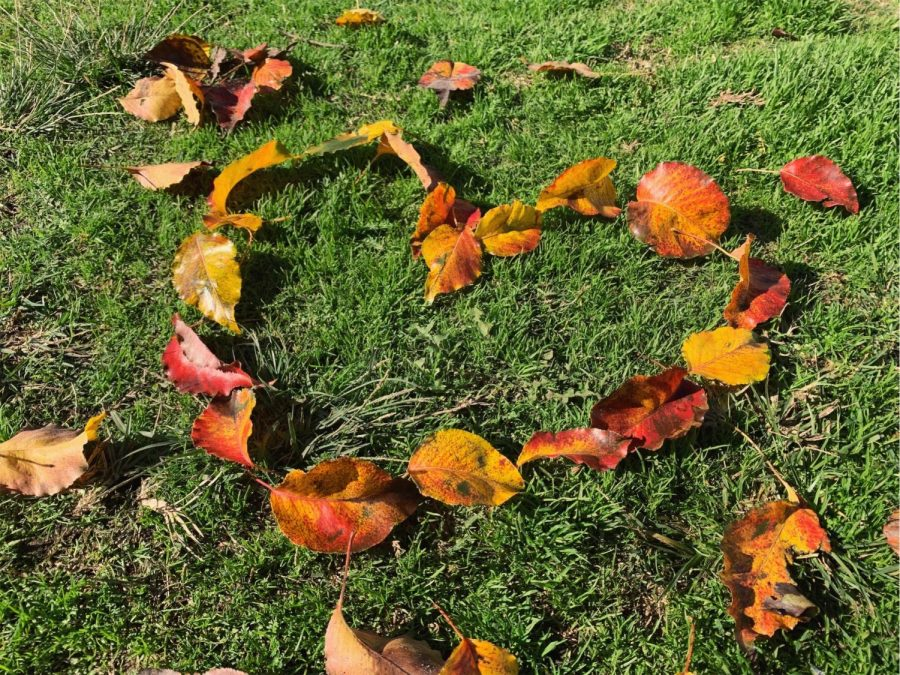 Fall+leaves+forming+the+shape+of+a+heart.
