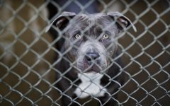 Photography from: PETS-SHELTER-MANAGE. Tribune Content Agency LLC, Chicago, 2014. eLibrary, https://explore.proquest.com/elibrary/document/1948439857?accountid=193113.