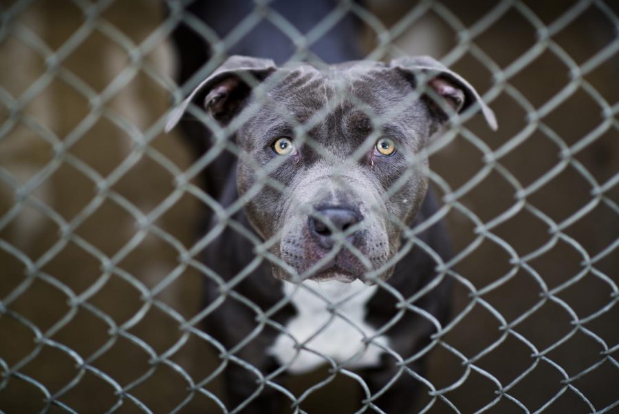 Massive amounts of pets abandoned due to misinformation about COVID-19