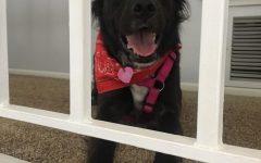 Preventing Puppy Exploitation